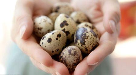 Перепелиные яйца. Польза