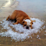Спасение от жары: больше воды, меньше мороженого