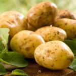 Доказано учеными: картофель способствует снижению веса