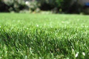 травосмеси для городского озеленения