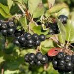 Натуральные продукты для снижения активности коронавируса